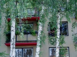 Дерево перед окном