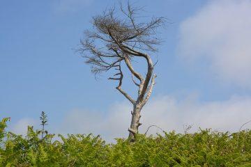 удаление древесно-кустарниковой растительности