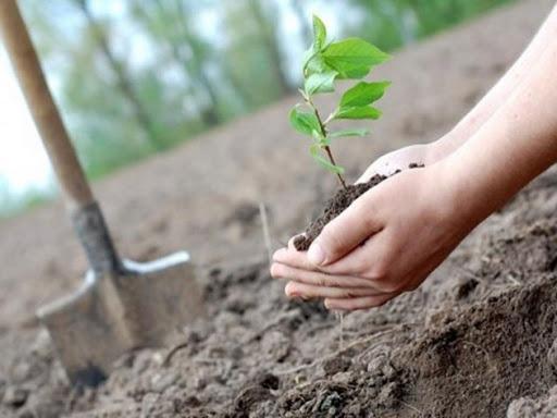 садовник и лесовод