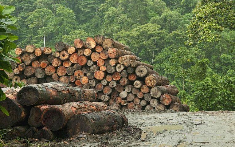 разрушение экосистем